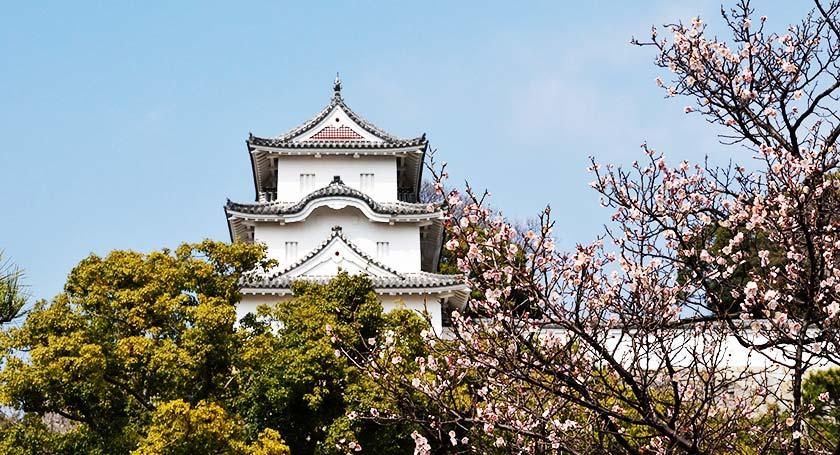明石城跡に彩りをそえる1000本の桜